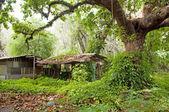 Jungle Hut — Stock Photo