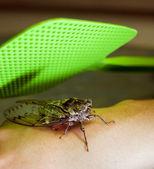 Bug Swat — Stock Photo