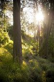 Foresta della fantasia — Foto Stock