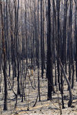Bush Fire — Stock Photo