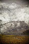Franz Joseph Glacier — Stock Photo