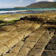 Tessellated Pavement — Stock Photo