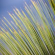 Grass Tree Details - Stock Photo