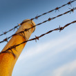 Royalty-Free Stock Photo: Barbed Fence
