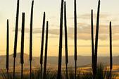Drzewa trawa tło — Zdjęcie stockowe