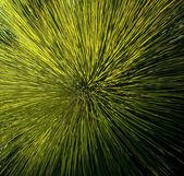 草ツリーの詳細 — ストック写真