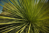 Grass Tree — Stock Photo