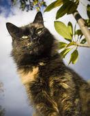 Jacht kat — Stockfoto