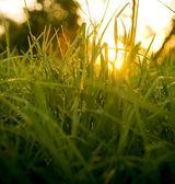 Gräs nivå sunrise — Stockfoto