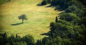 Separate Tree — Stock Photo