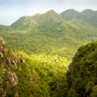 Stock Photo: Jungle Landscape
