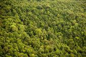 Dosel del bosque — Foto de Stock