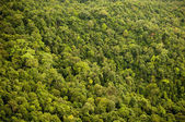 Forest Canopy — Stock Photo