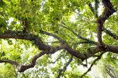 Espesa selva — Foto de Stock