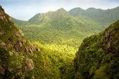 Jungle Landscape — Stock Photo