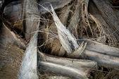 パーム ツリーの背景色 — ストック写真