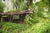 Orman hut — Stok fotoğraf