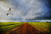 Country road and birds in old style — Stock Photo