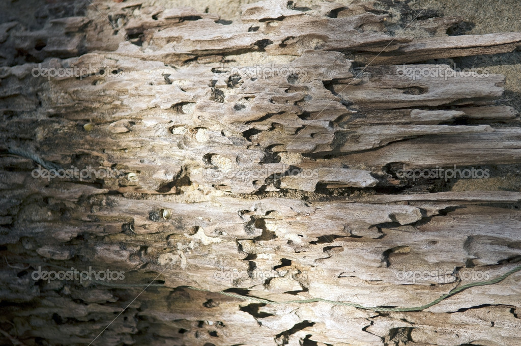 Texture of decaying drift wood in light and shadow — Stock Photo #7835284