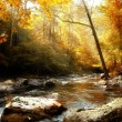 Autumn Creek in morning - Stock Photo