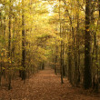 Autumn pathway in the forest — Stock Photo