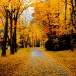 Autumn pathway covered in leaves — Stock Photo