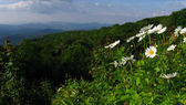 Mountain Wild flowers — Stock Photo