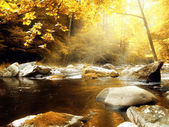 Autumn Creek — Foto Stock