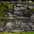 Stone wall with Ivy - Stock Photo