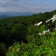 Blue ridge mountains Panorama — Stock Photo