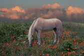 Horse at sunset — Stock Photo