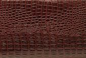 The texture of crocodile — Stock Photo