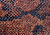 The texture of a snake — Stock Photo