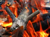 The wood in the fire — Stock Photo