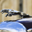 Jaguar on antique car - Stock Photo