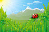 Grassfield landscape with ladybug, dew drops and mountains. — Stock Vector