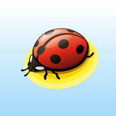 Lady bug — Stock Vector