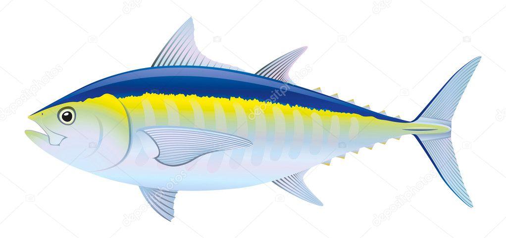 Tuna fish stock vector daulon 7689318 for Tuna fish price