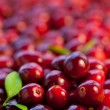 Fresh red cranberries — Stock Photo #7785230