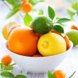 Mixed citrus fruit - Foto Stock