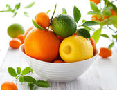 Mixed citrus fruit — Stock Photo