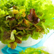 Royalty-Free Stock Photo: Mixed lettuce in a bowl