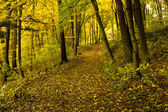 Autumn Forrest - Path with Leaves on floor — Stock Photo