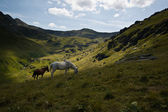 Horses in green mountain valley with beautiful clouds — Stock Photo