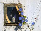 Okienko i kwiatek — 图库照片