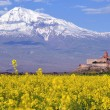 Ararat in Armenia — Stock Photo