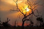 Bushfire sunset — Stock Photo