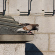 Pigeons on the roof — Stock Photo #7693741