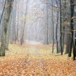 Autumn pure gold road in the forest — Stock Photo