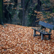 Bench in the forest in autumn — Stock Photo
